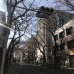 久米川 美容室|久米川も桜咲き始めました!