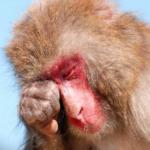 久米川 美容院|髪の毛の花粉対策